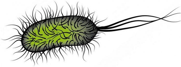 Suda bulunan Salmonella UV yok eder